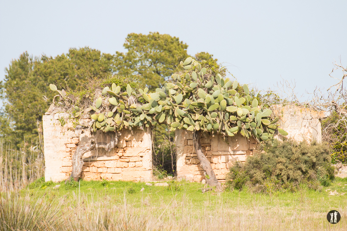 S'Albufera - Ruine mit Kaktus